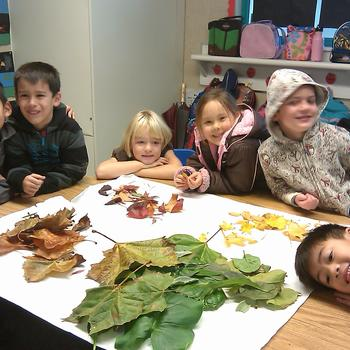 Sorting Leaves - Kindergarten