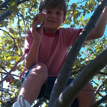 Get out of the tree Gavin.