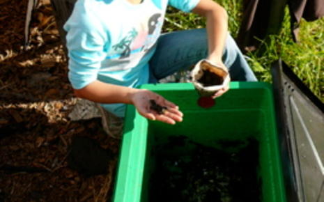 Harvesting a Worm Bin-4th grade