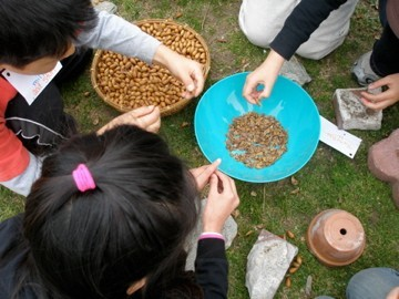 Processing Acorns (4th Grade)